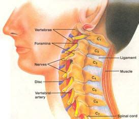 c section nerve damage cervical spine anatomy the cervical spine begins at the