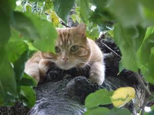 cat and tree tree cat isobel and cat s