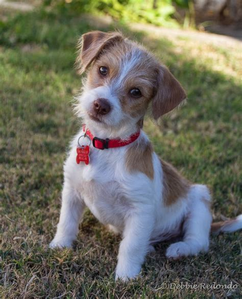 shelter puppies for adoption clairemont news small adoption event this saturday