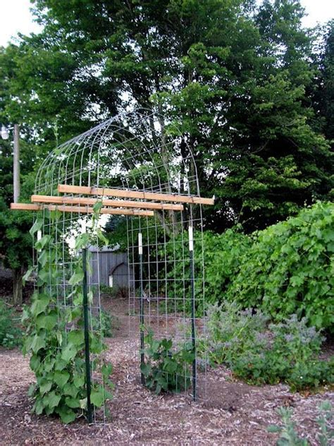 Garden Arbor Height 17 Best Images About Grapevine Trellis Support On