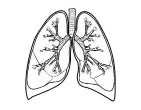 Lungs And Bronchi Coloring Page  Coloringcrewcom sketch template
