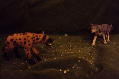 wolf vs pin hyena vs wolf on