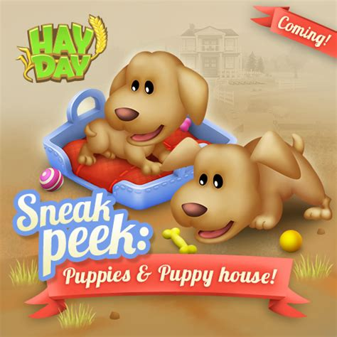 sneak a peek puppies hay day sneak peek hay day wiki strategy guides tips and tricks