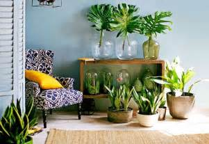 Indoor Plant Decoration by 99 Great Ideas To Display Houseplants Indoor Plants