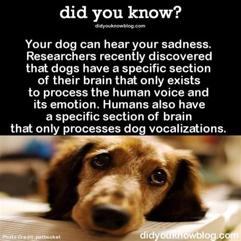 dogs facts 25 best images about quotes about on interesting quotes about