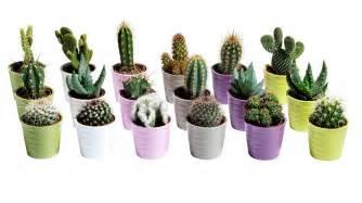 Plantas De Interior Tipos