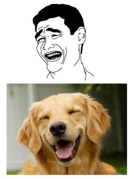 Dog Face Meme - matched dog and rage face memes 8 pics izismile com