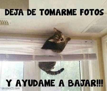 tagged humor imagenes chistosas imagenes con frases imagenes de humor fotos graciosas de gatos con perros imagenes de gatitos