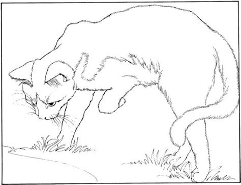 coloring pages of real cats realistic cat coloring pages bestofcoloring com