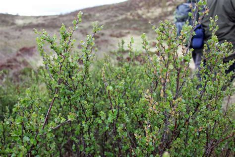 Trees For The Charity Thats Restoring The Caledonian Forest by Uk Archives Dr Borrell