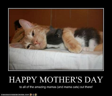 Happy Mothers Day Meme - funny pictures funny pictures happy mothers day
