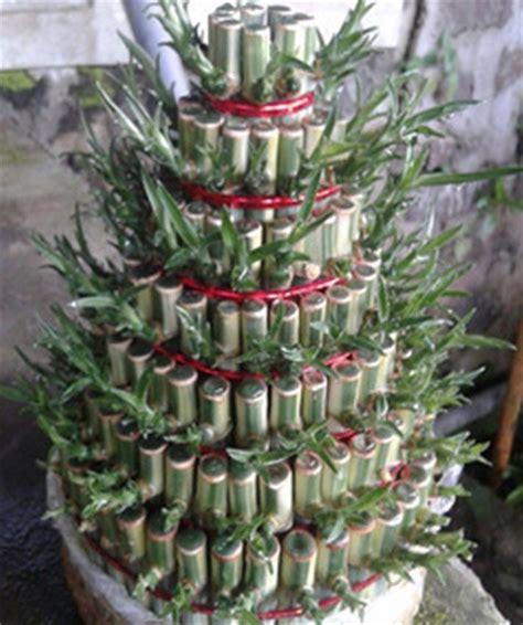 Tanaman Hias Pagoda Putih tanaman bambu hoki pagoda 7 tingkat variegata jual