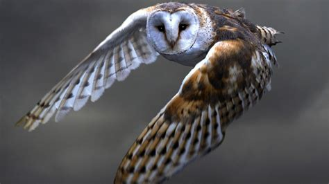 owls flying quotes