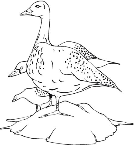 ducks unlimited coloring page ducks unlimited pages coloring pages