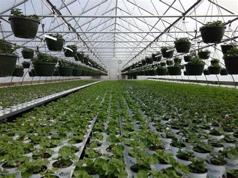 best greenhouses your best greenhouse is your best bet for growing