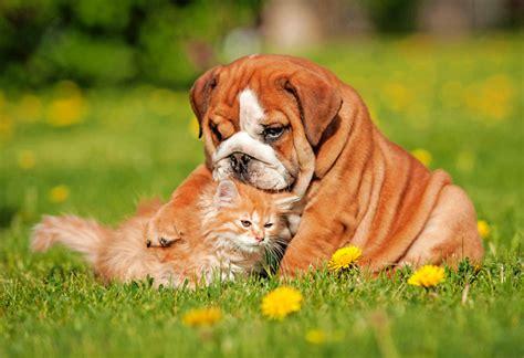killer safe for dogs pet safe killer effective non toxic killers