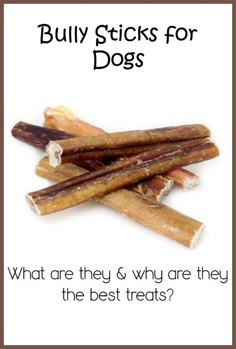 bully stick for dogs why are bully sticks one of the best treats dogvills