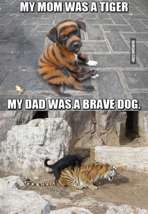 badass dogs tiger and brave humoar