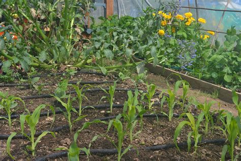 How To Set Up A Rainwater Irrigation System For Your Water Vegetable Garden