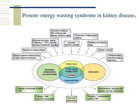 protein kidney disease ppt nutrition therapy and dialysis powerpoint