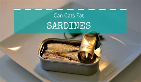 can dogs eat sardines sardines in a can how to eat