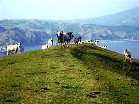 buro l file goats in batanes png
