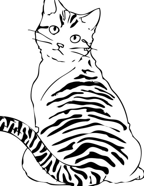 coloring pages of tabby cats tabby cat pages coloring pages