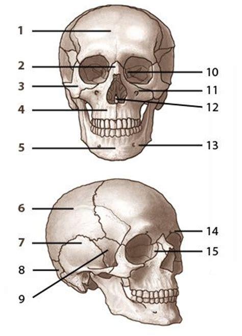 skeleton diagram quiz bones of the skull labelled from www free anatomy quiz