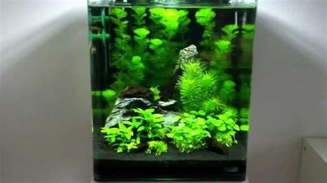 Shrimp Tank Aquascape Nano Cube 30l Youtube