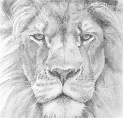 Sketches And Drawings by Pencil Sketch Images Pencil Sketches Of Lions