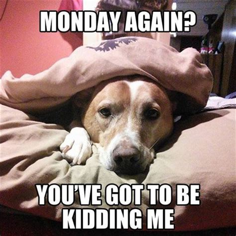 Monday Dog Meme - 11 marvelous meme monday dog memes petcentric by purina