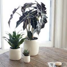 Small Desk Plants That Don T Need Sunlight Office Plants That Don T Need Sunlight Office Plants