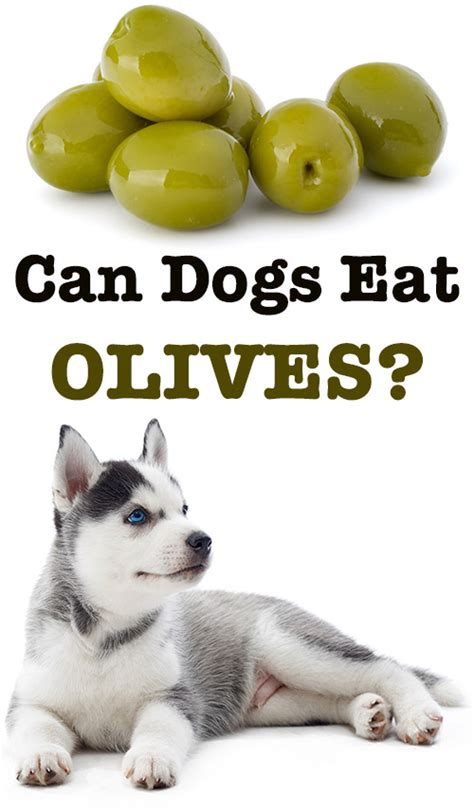 can dogs eat olives can dogs eat olives are they safe or poisonous for dogs