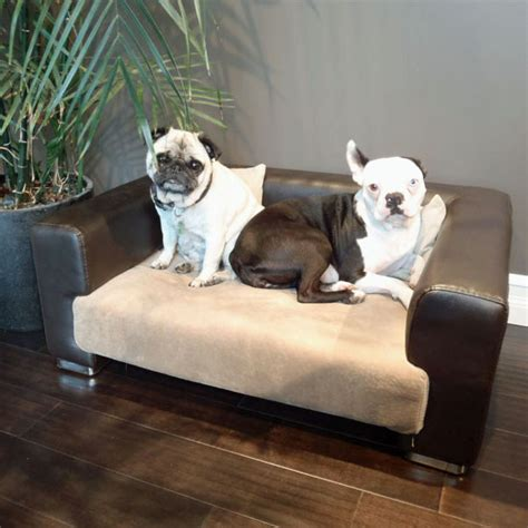 dog r for sofa dog couches for small dogs 28 images dog beds for