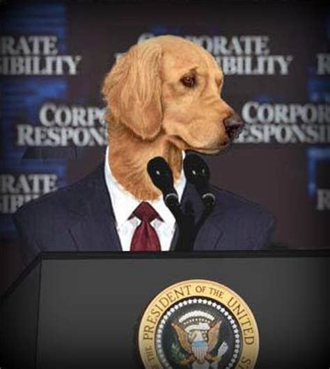 presidential dogs what is puppy socialization and how do we get it right