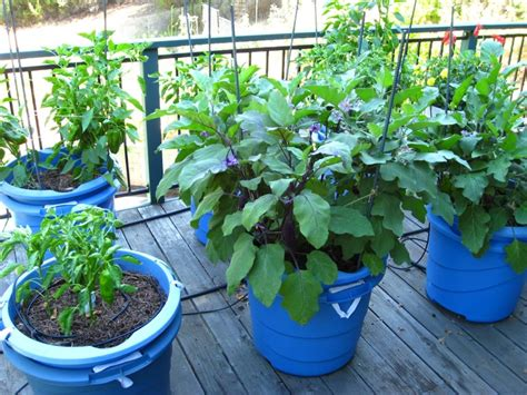 growing vegetables in containers 187 izreal