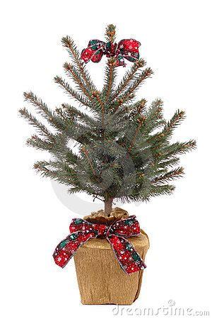 vaso per albero di natale albero di natale conservato in vaso immagini stock libere
