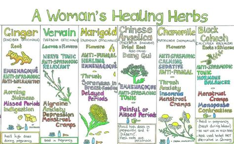 herbs chart the natural store liz cook wall chart a woman s