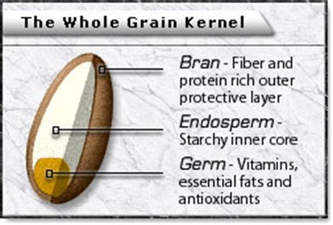 whole grain kernel diagram cereal and sugar a look at the nutrition facts