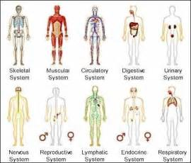 knowing body printable human body systems worksheets