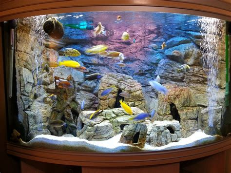 3d aquarium background 3d background made to measure for a corner tank and set of