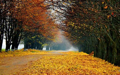 fall landscape autumn forest landscape wallpaper 1206794