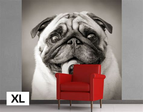pug wallpaper for walls uk fleece wall mural funny pug wallpaper fleece mural dog