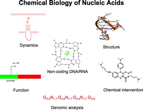 exle of nucleic acid image gallery nucleic acids biology