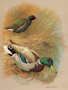 mary woodin england illustrator mallard ducks secret spot wood ducks by jim hautman wild wings art