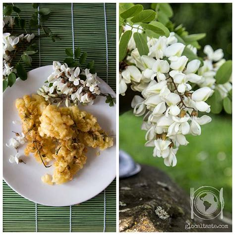 fiori acacia fiori da mangiare frittelle con fiori di acacia