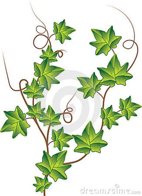 Twig Decor Green Ivy Vector Illustration Stock Photos Image 13511233