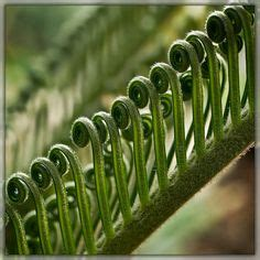 pattern repetition in nature 1000 images about repetition in nature on pinterest in