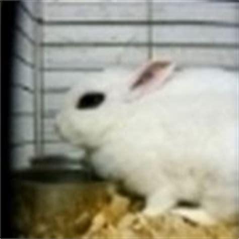 gabbie conigli nani allevamento conigli nani conigli nani come allevare i