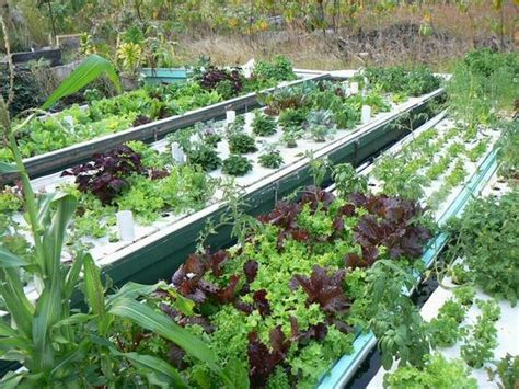 Home Design Kerala 2015 Aquaponics Is Easy With Our Systems Friendly Aquaponics